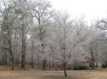 Winter-Feb.-2015