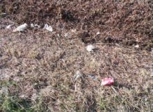 Litter in Bladenboro