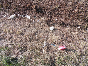 Litter in Bladenboro