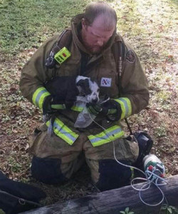Bladenboro firefighter Joey Coleman revives puppy