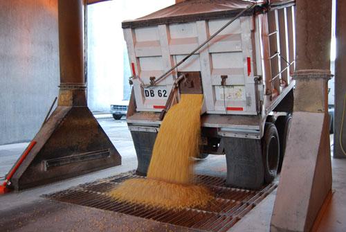 Unloading-corn
