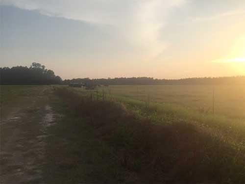 Cattle-in-Field-1