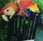 missing macaw in Elizabethtown