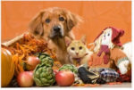 bladen-county-animal-shelter-says-thank-you