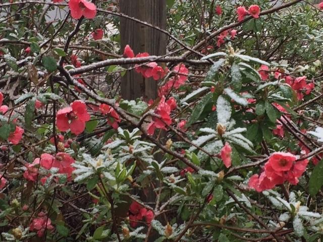 Snowy Flowers