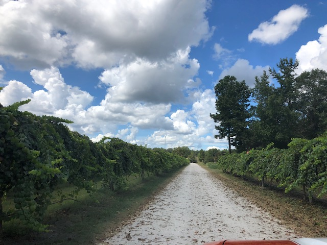 Farm Harvest Hurricane Florence 2
