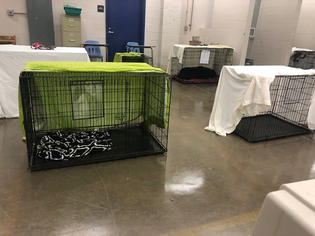 pet hurricane shelter