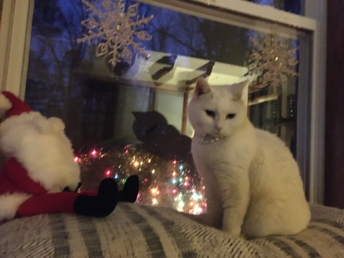 Bladen Pet Contest Bella Claus