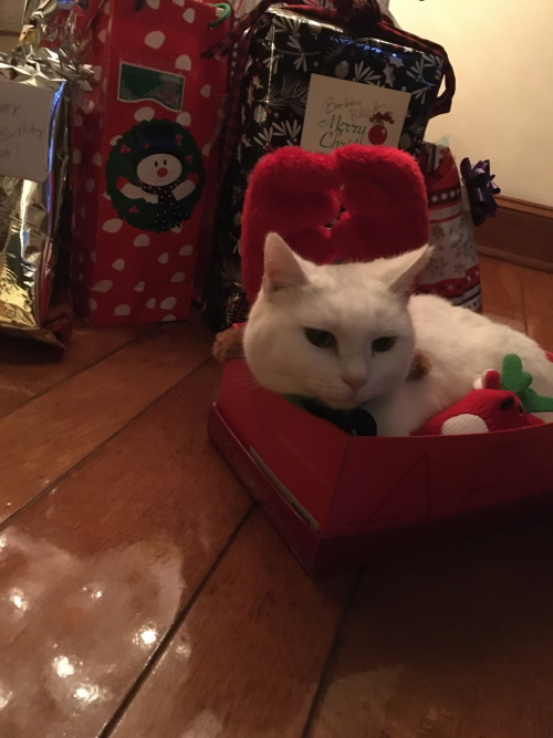 Bladen Pet Contest Bella in a Box