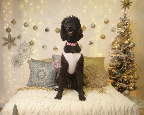 Bladen Pet Contest Harlee Kate Daughety