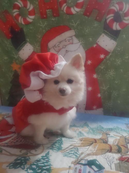 Bladen Pet Contest Sassy